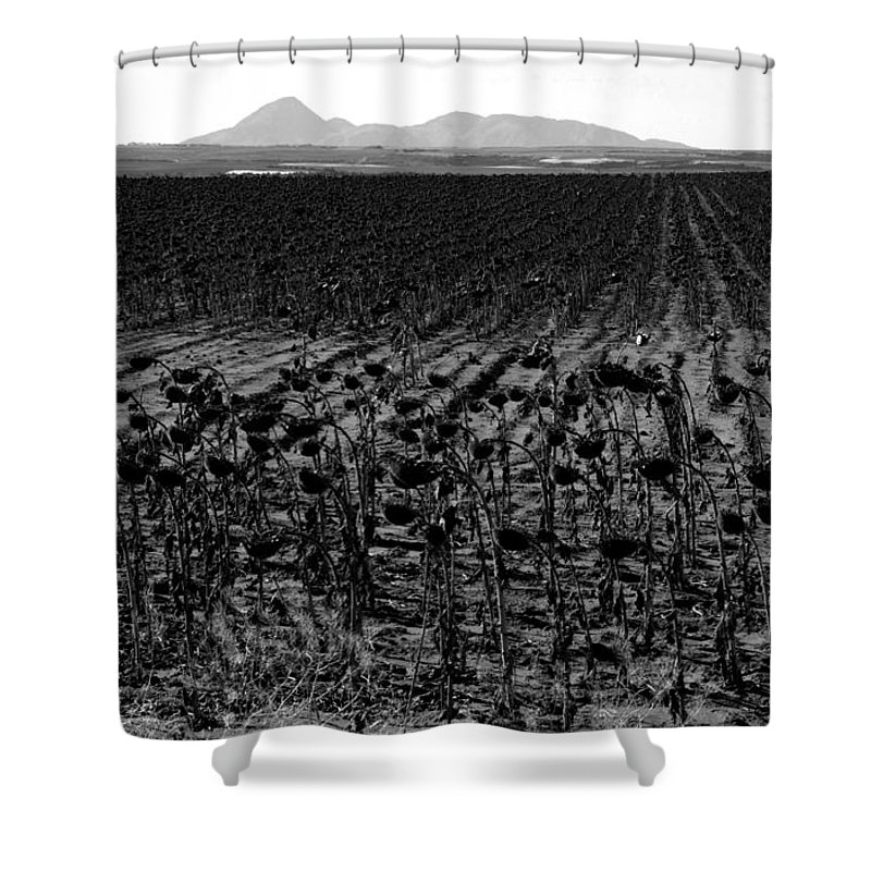 Sunflowers Shower Curtain featuring the photograph March Of The Sunflowers by David Lee Thompson