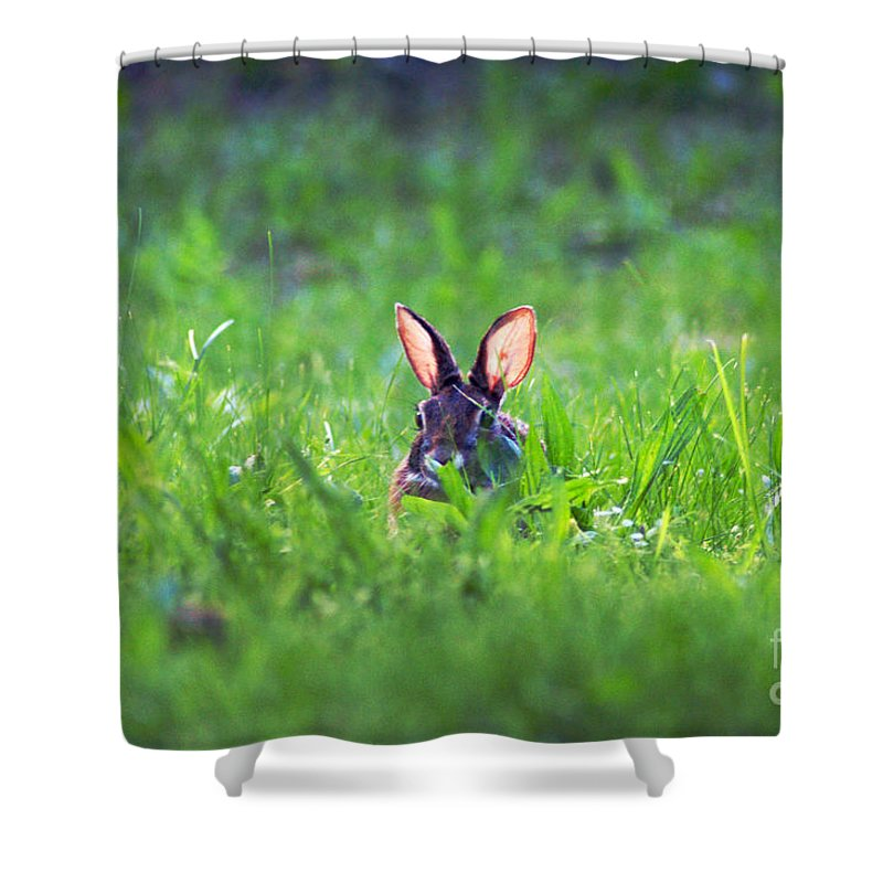 Clay Shower Curtain featuring the photograph Marco - Polo by Clayton Bruster