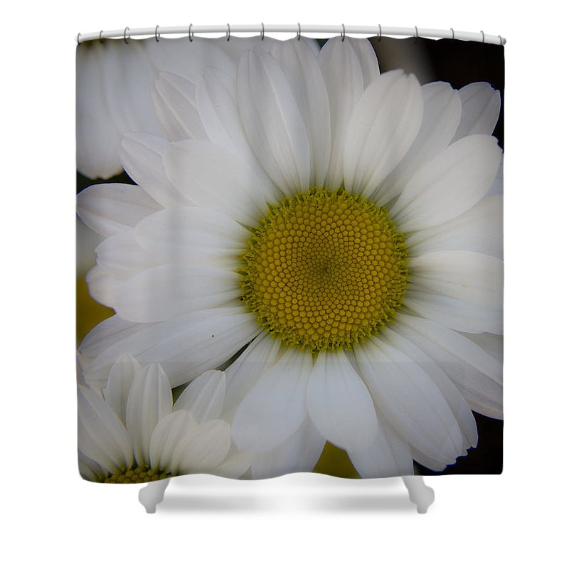 Marguerite Shower Curtain featuring the photograph Marguerite Daisies by Teresa Mucha