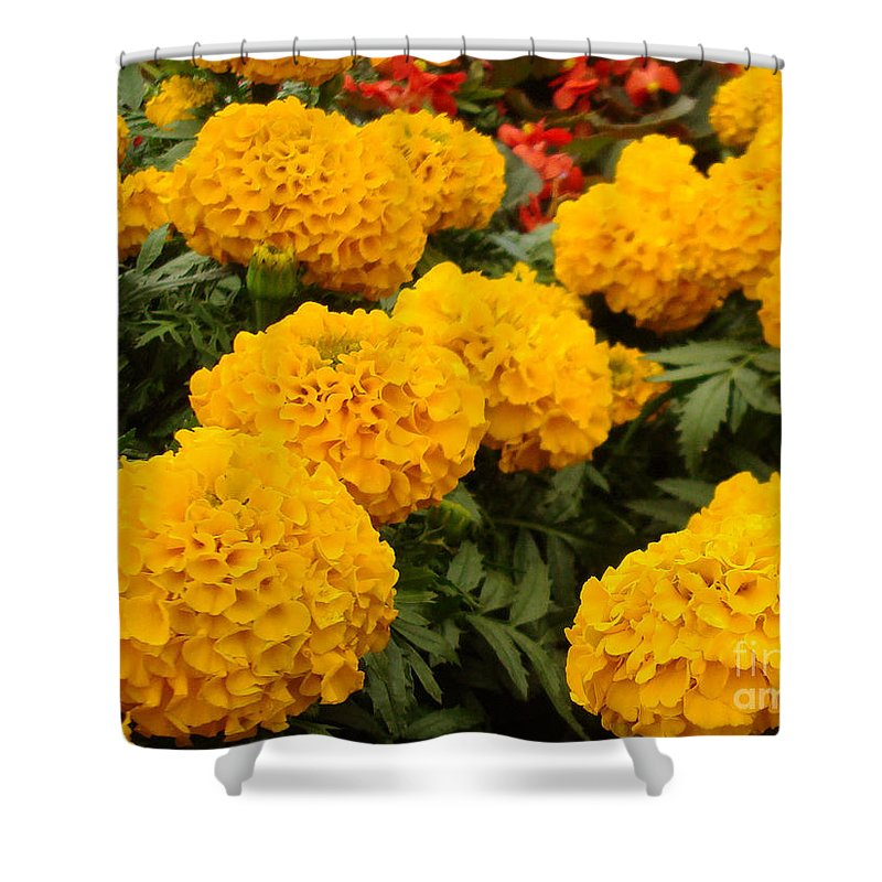 Flower Shower Curtain featuring the photograph Marigold Party by Kathy Bucari