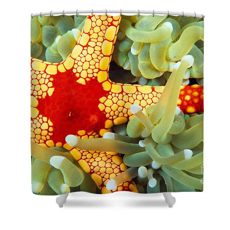 30-pfs0125 Shower Curtain featuring the photograph Marine Life, Close-up by Dave Fleetham - Printscapes