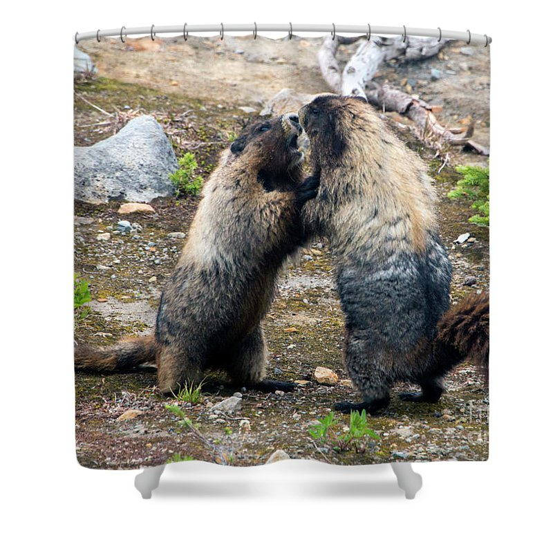 Marmot Shower Curtains