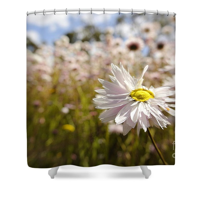 Paper Flower Shower Curtain featuring the photograph Marvelous Imperfection by Oscar Moreno