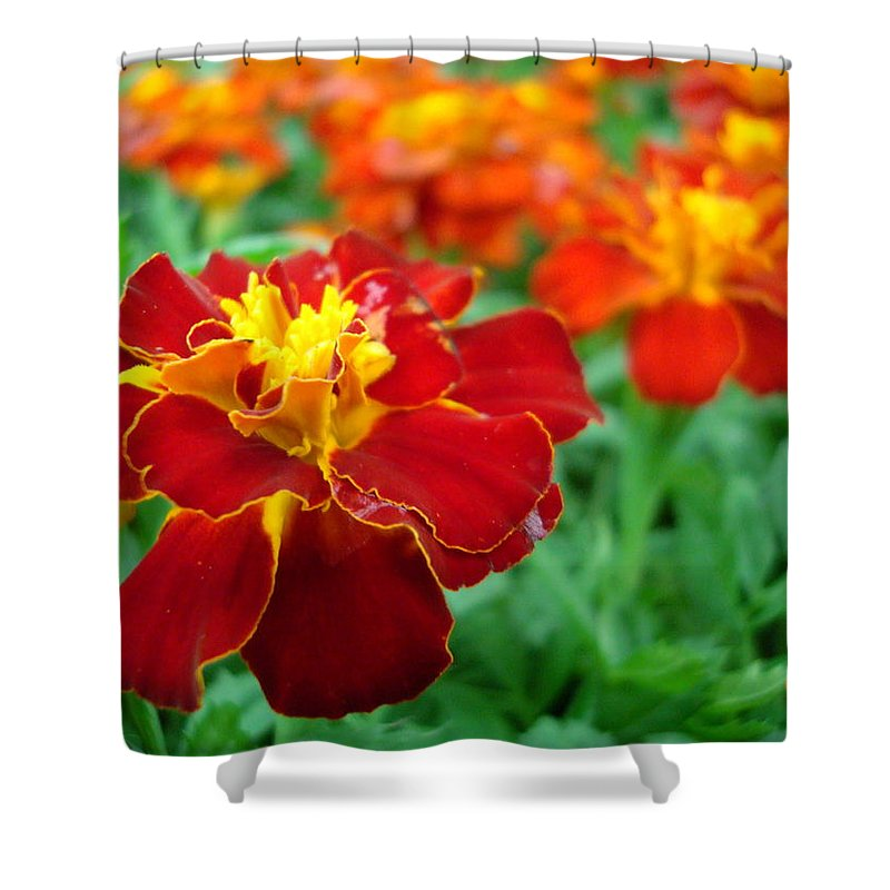 Marigold Shower Curtain featuring the photograph Mary Gold by Kathy Bucari