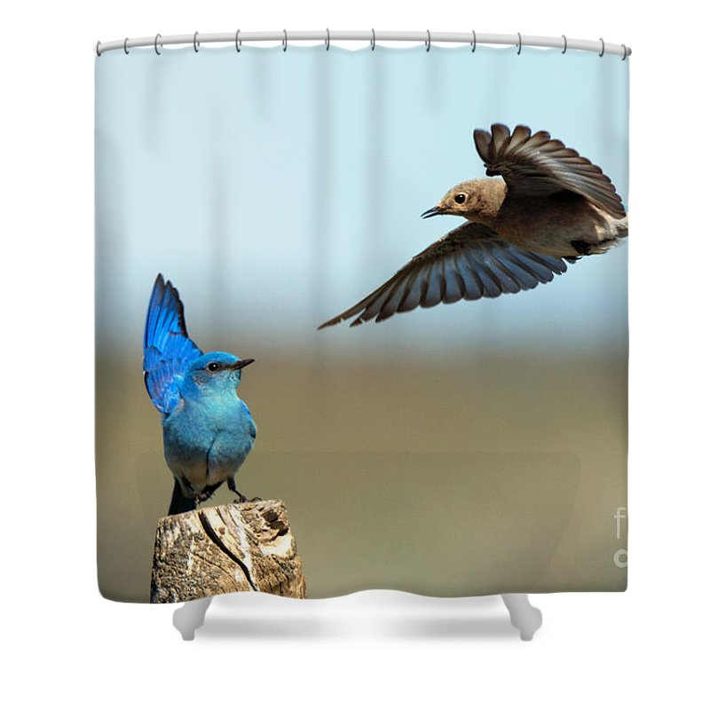 Mating Ritual Shower Curtains