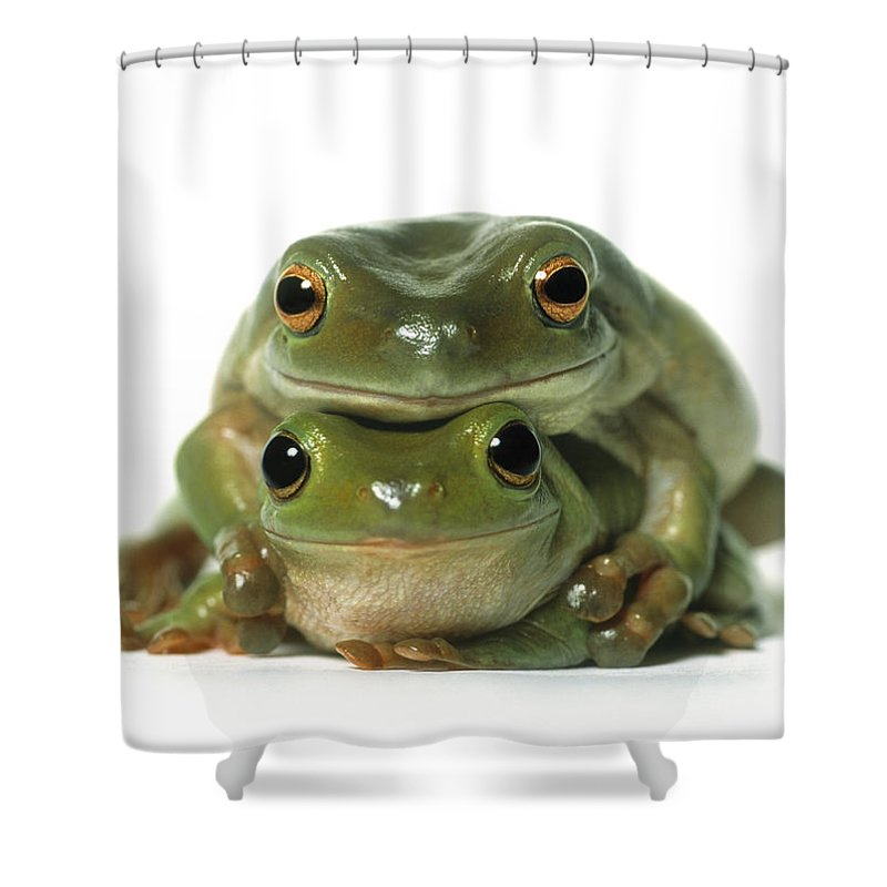Light Shower Curtain featuring the photograph Mating Frogs by Darwin Wiggett