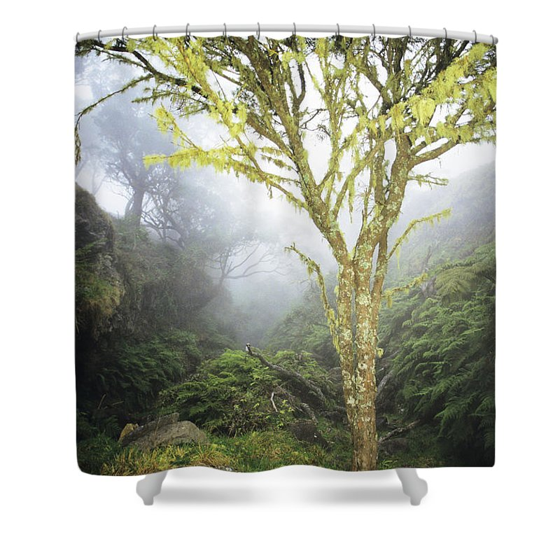Big Shower Curtain featuring the photograph Maui Moss Tree by Erik Aeder - Printscapes