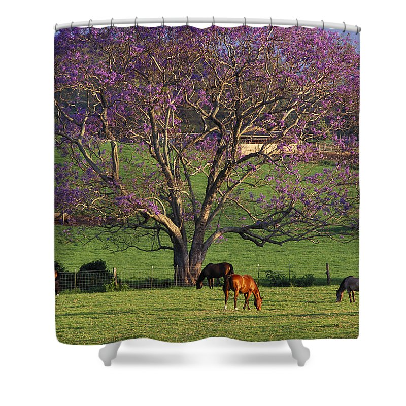 Animal Art Shower Curtain featuring the photograph Maui, Upcountry by Ron Dahlquist - Printscapes