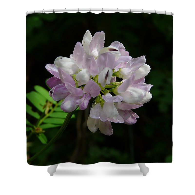 Flower Shower Curtain featuring the photograph Mauve Flower by Valerie Ornstein