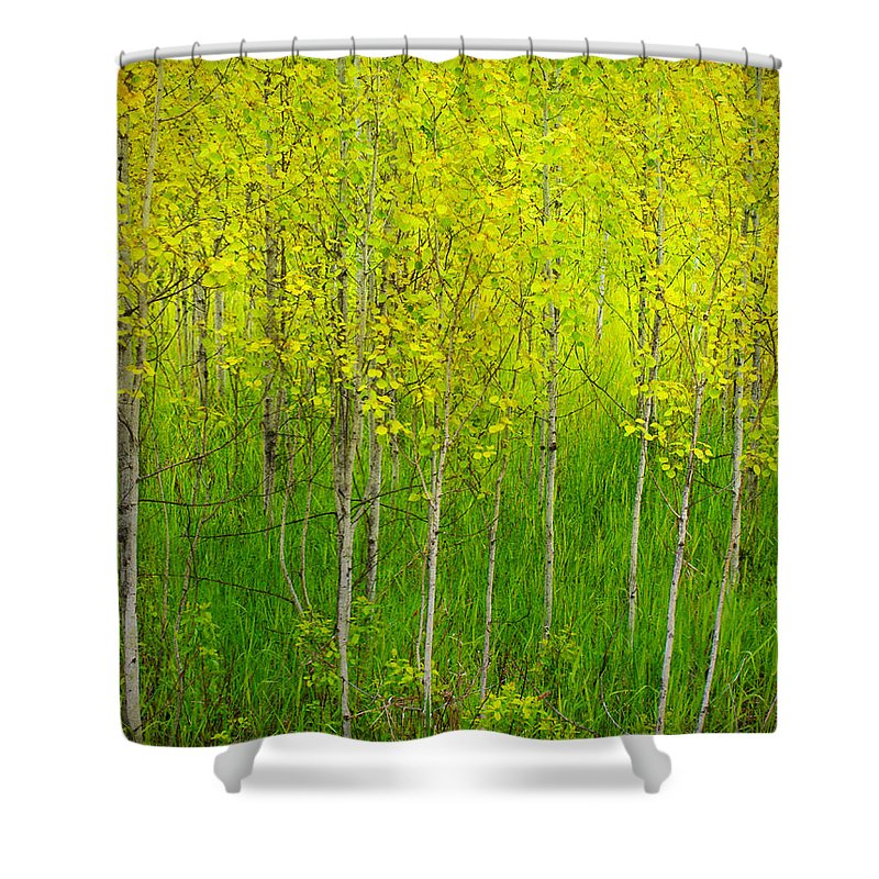 Trees Shower Curtain featuring the photograph May 25 2010 by Tara Turner