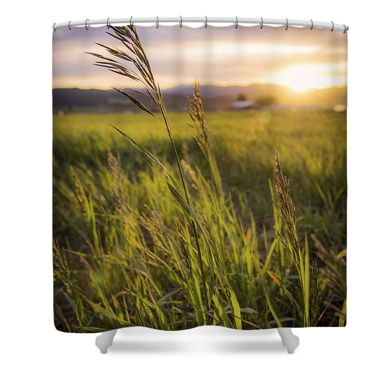 Meadow Light Shower Curtain featuring the photograph Meadow Light by Chad Dutson