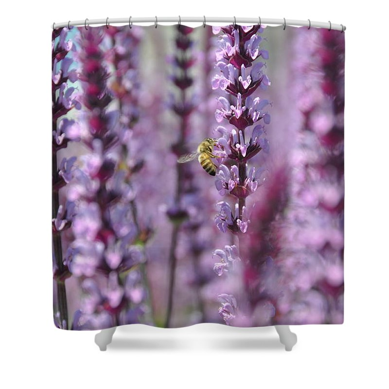 Flower Shower Curtain featuring the photograph Meadow Sage by Rich Bodane