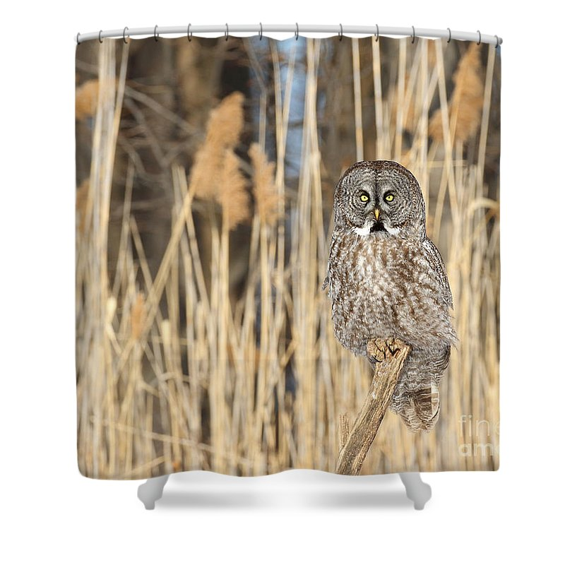 Owl Shower Curtain featuring the photograph Meadowland Deity by Heather King