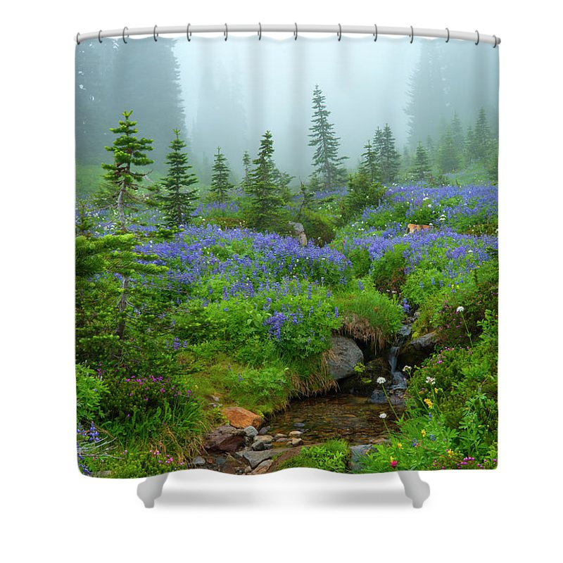 Stream Shower Curtain featuring the photograph Meadows In The Mist by Mike Dawson