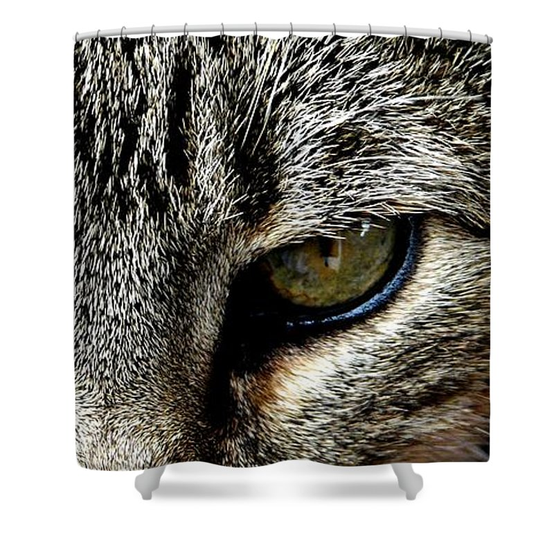 Cat Shower Curtain featuring the photograph Me...dangerous...never. by Valerie Ornstein