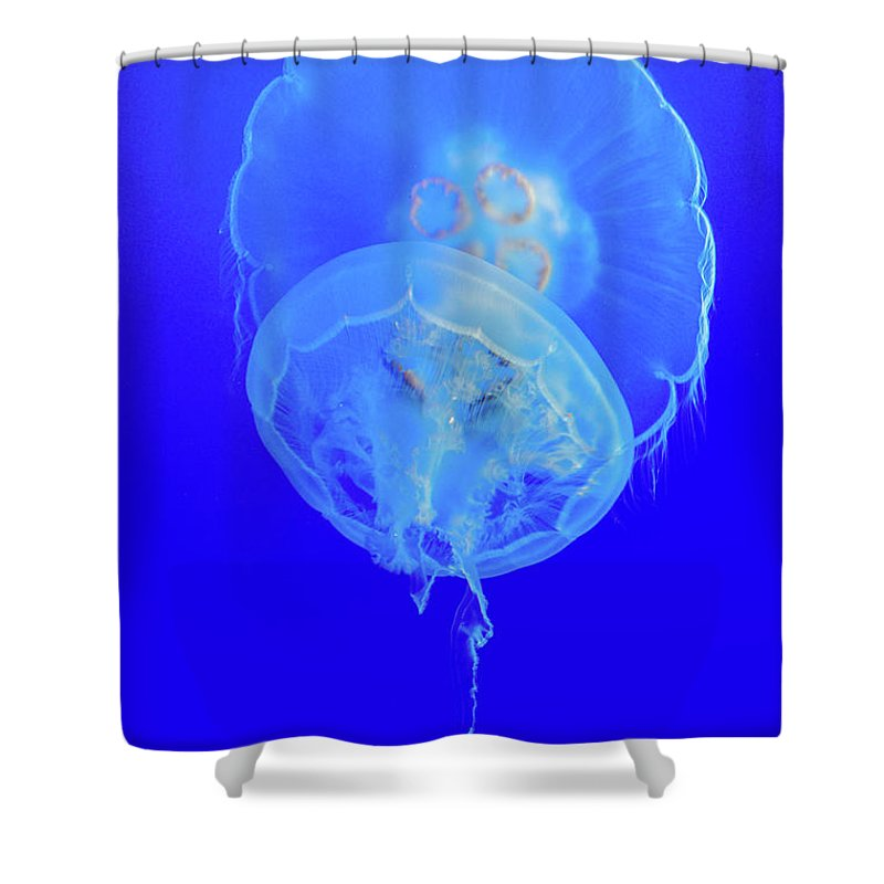 Monterey Bay Shower Curtain featuring the photograph Medusa Jelly Fish by Tommy Anderson