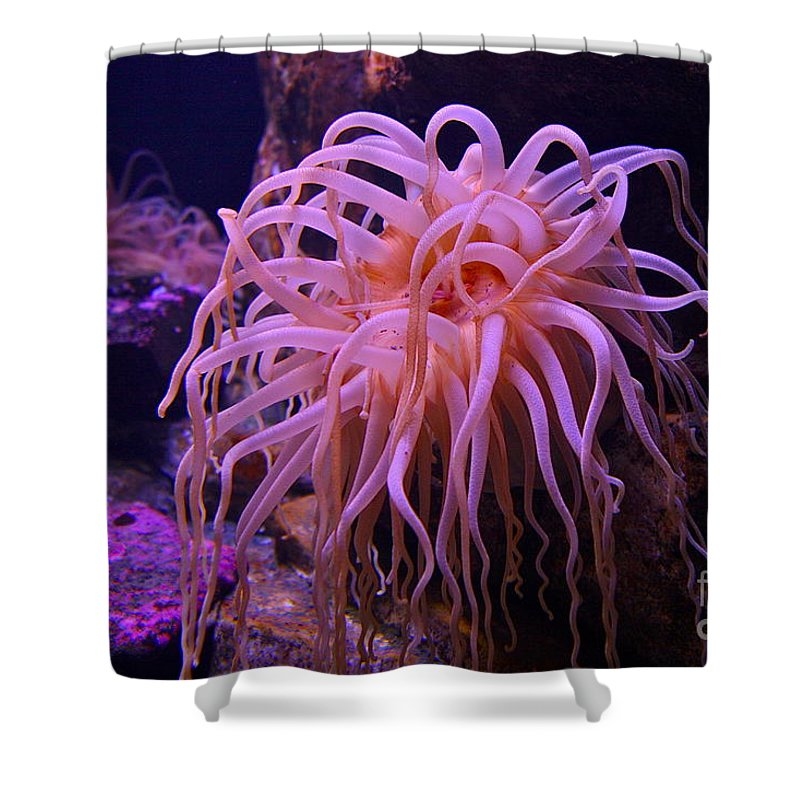Ocean Shower Curtain featuring the photograph Medusa by Rick Monyahan