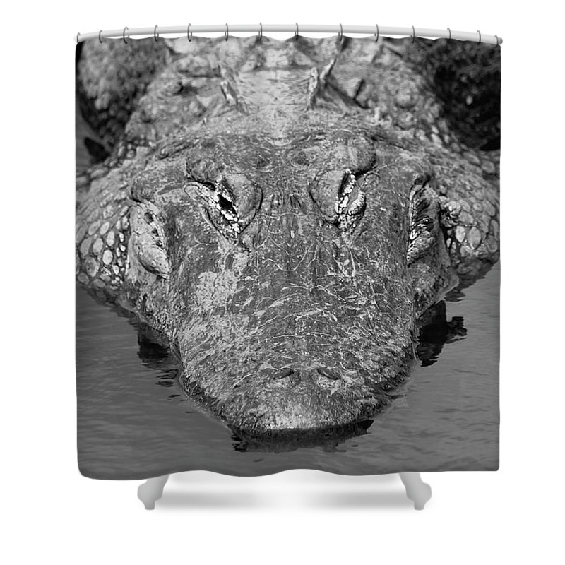 Photo For Sale Shower Curtain featuring the photograph Meet Me For Lunch by Robert Wilder Jr