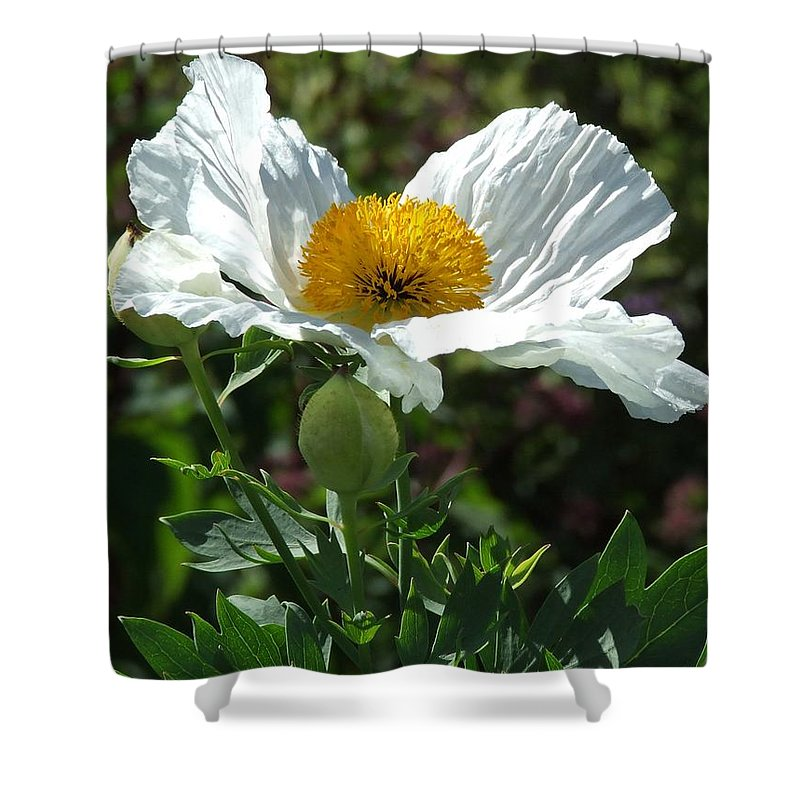 Poppy Shower Curtain featuring the photograph Mega-poppy by Bob Kemp