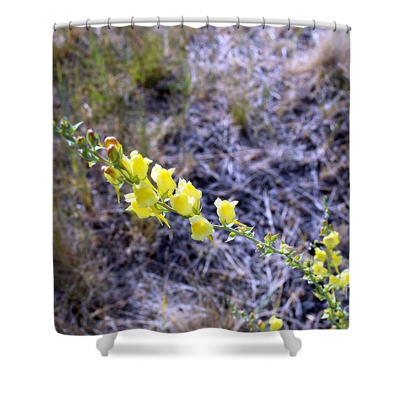 Wildflowers Shower Curtain featuring the photograph Who Is This Yellow Fellow by Janet Marie