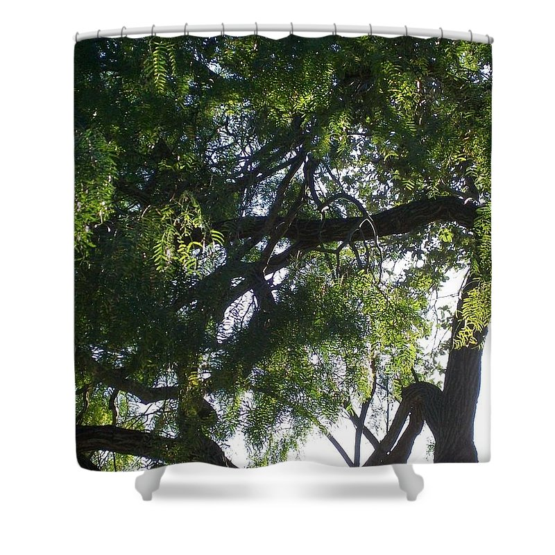 Mesquite Tree Shower Curtain featuring the photograph Mesquite Tangle by Laurette Escobar