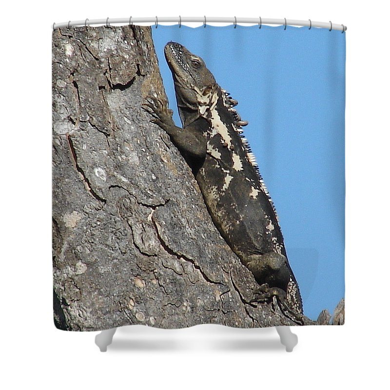 Iguana Tree Brown Blue Sky Shower Curtain featuring the photograph Mexican Treasure by Luciana Seymour