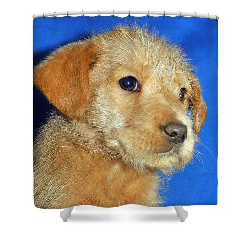 Dog Shower Curtain featuring the photograph Michael Portrait by Eric Liller