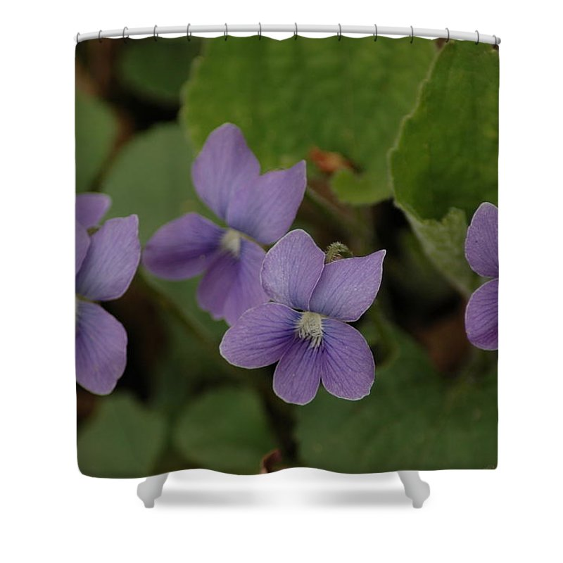 Michigan Purple Spring Flowers Shower Curtain For Sale By Leeann