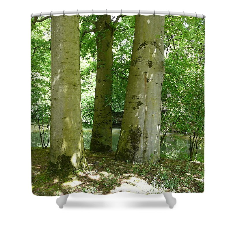 Landscape Shower Curtain featuring the photograph Mighty Beech Trees by Valerie Ornstein