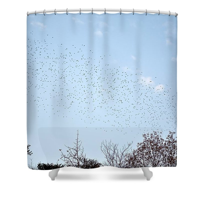 Birds Shower Curtain featuring the photograph Migrating Birds by Jeramey Lende