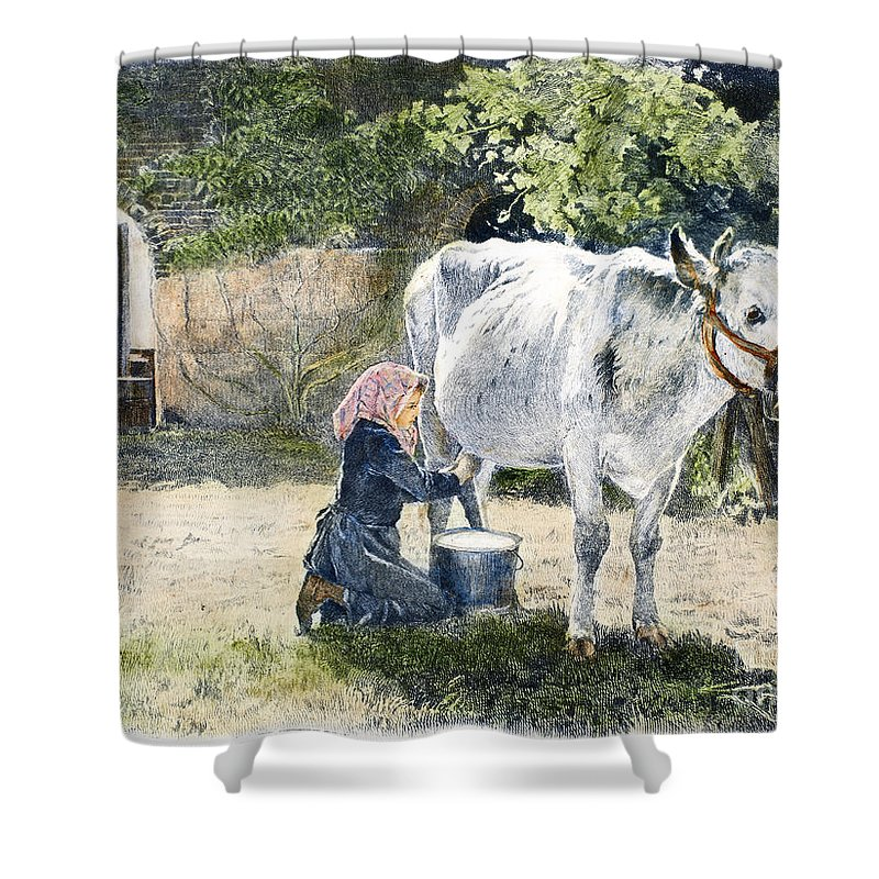 19th Century Shower Curtain featuring the photograph Milking, 19th Century by Granger