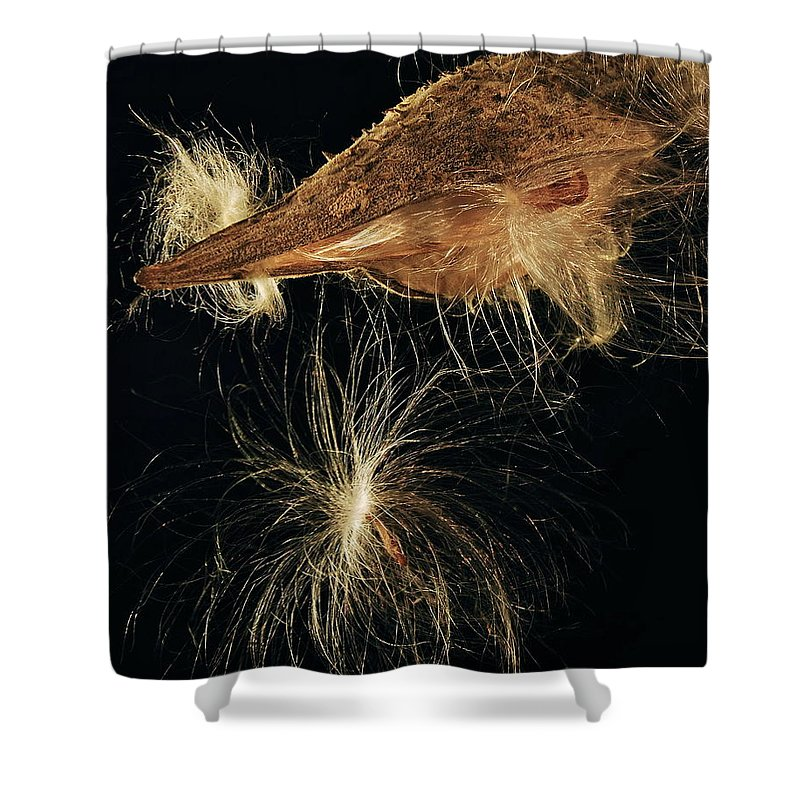 Mgp Photography Shower Curtain featuring the photograph Milkweed Pod by Michael Peychich