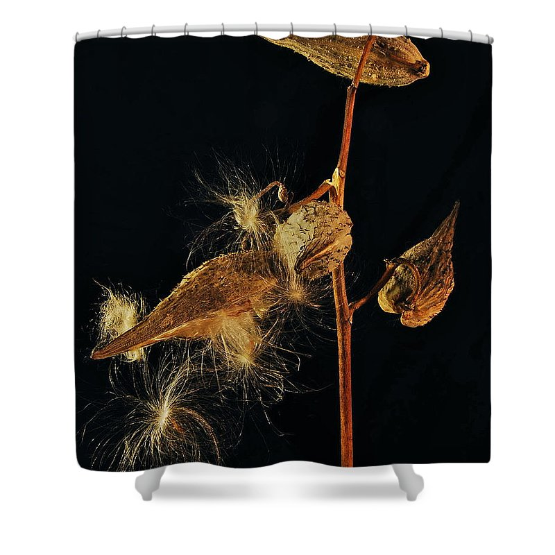 Mgp Photography Shower Curtain featuring the photograph Milkweed Pods by Michael Peychich