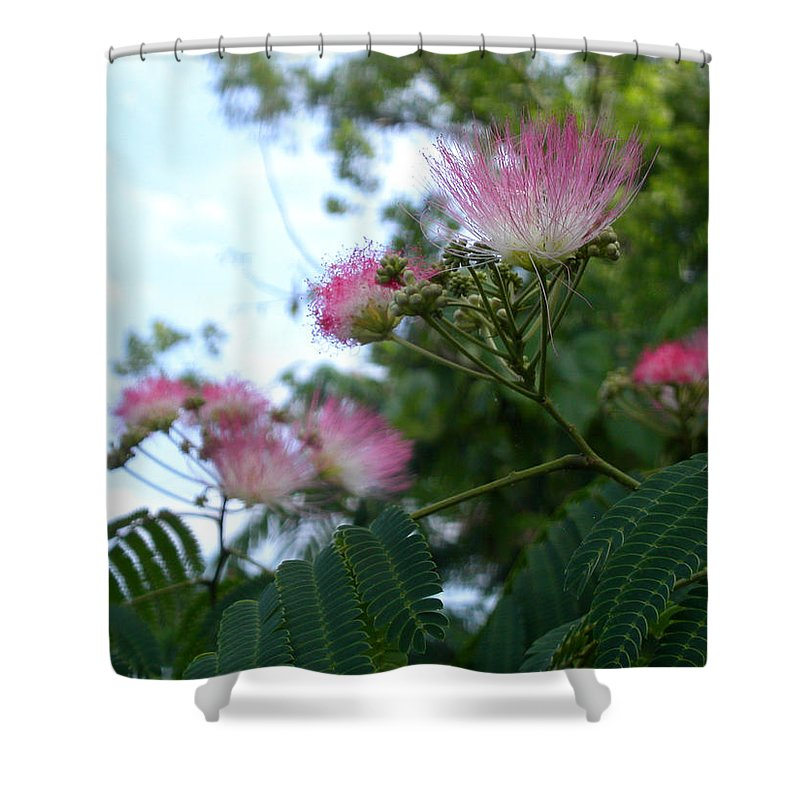 Mimosa Shower Curtain featuring the photograph Mimosa Sky by Anne Cameron Cutri