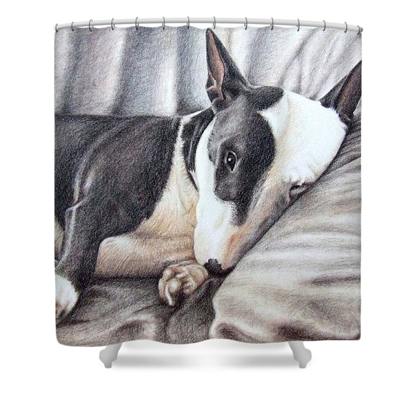 Dog Shower Curtain featuring the drawing Mini Bulldog Terrier by Nicole Zeug