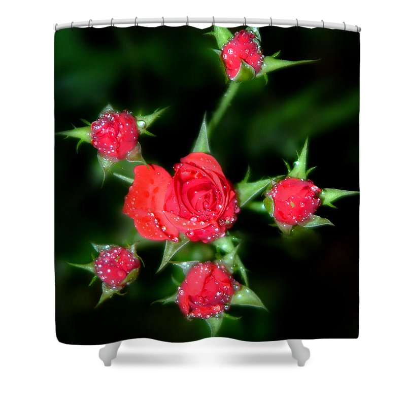 Roses Shower Curtain featuring the photograph Mini Roses by Anthony Jones
