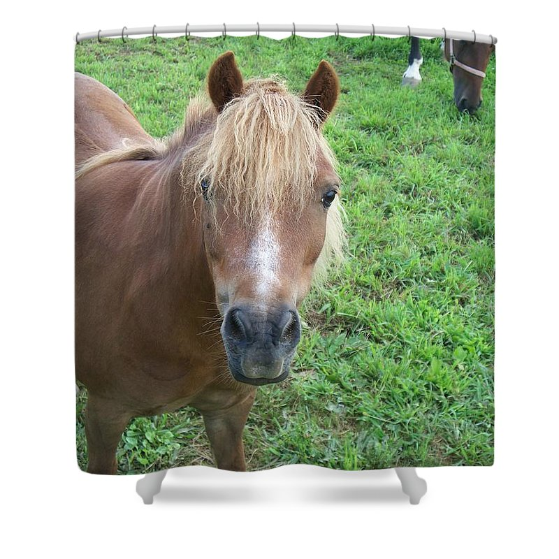 Miniture Shower Curtain featuring the painting Miniature Horse by Eric Schiabor