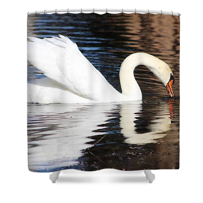Swan Shower Curtain featuring the photograph Mirror Image by Tonya Peters