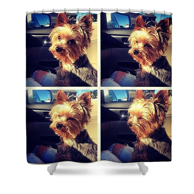 Sunshine Shower Curtain featuring the photograph Sometimes Its Too Bright by Kate Arsenault