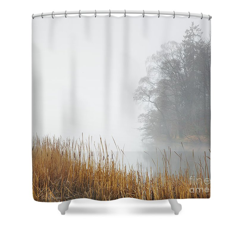 Landscape Shower Curtain featuring the photograph Misty Trees And Reeds by Tony Higginson