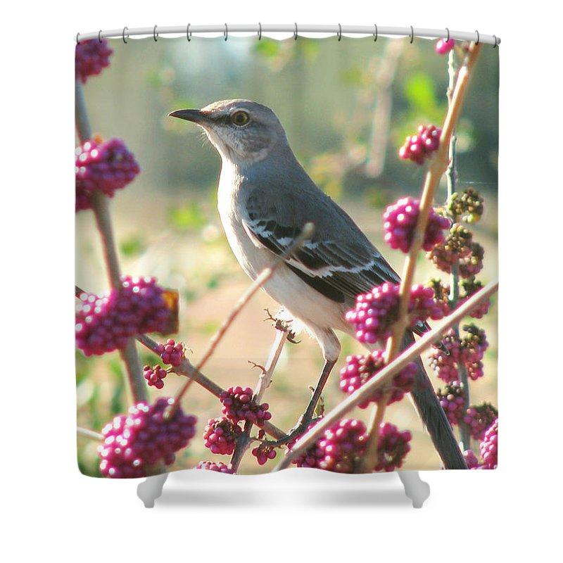 Nature Shower Curtain featuring the photograph Mockingbird Heaven by Peg Urban