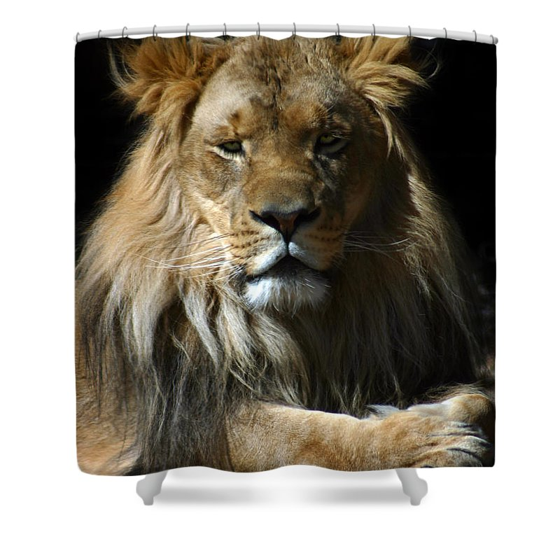 Lion Shower Curtain featuring the photograph Mohawk by Anthony Jones