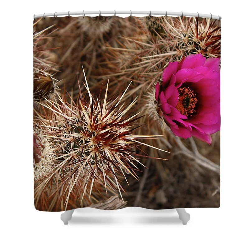 Shower Curtain featuring the photograph Mojave Magenta by Eric Rosenwald