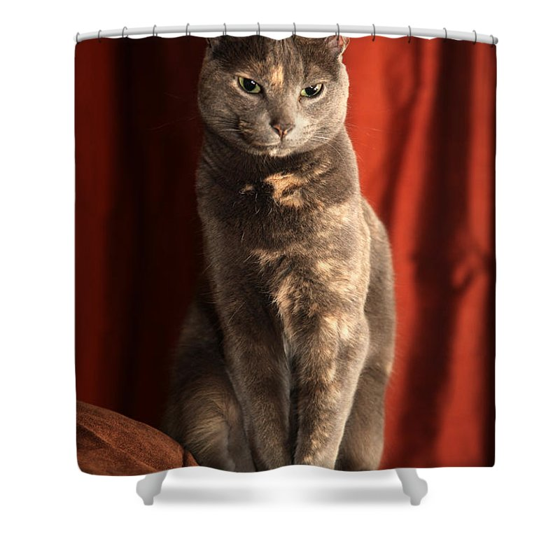 Cat Shower Curtain featuring the photograph Mollie by Amanda Barcon