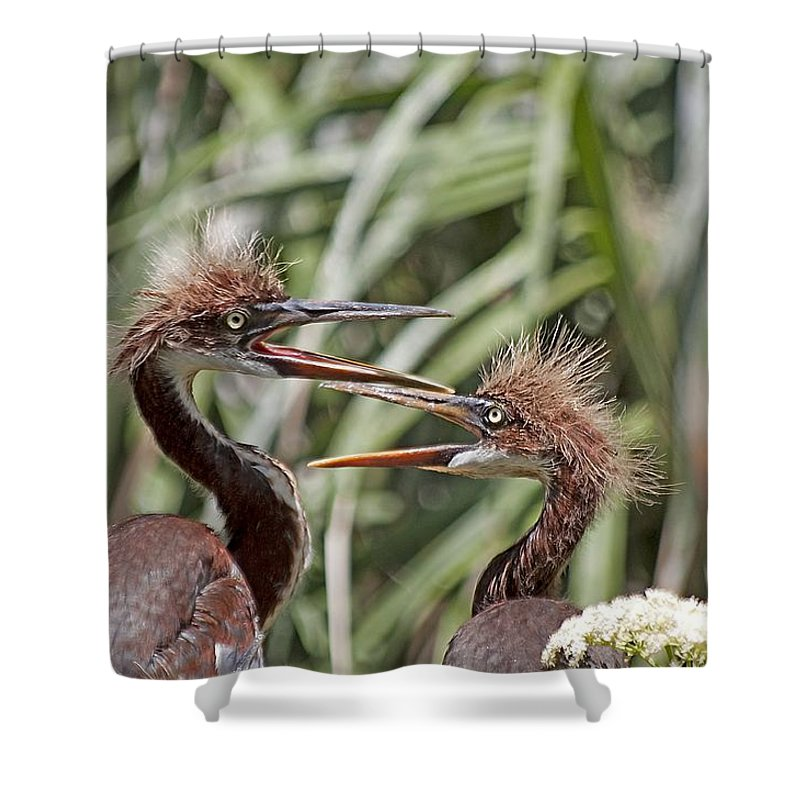 Wildlife Shower Curtain featuring the photograph Mom Always Liked You Best by Kenneth Albin