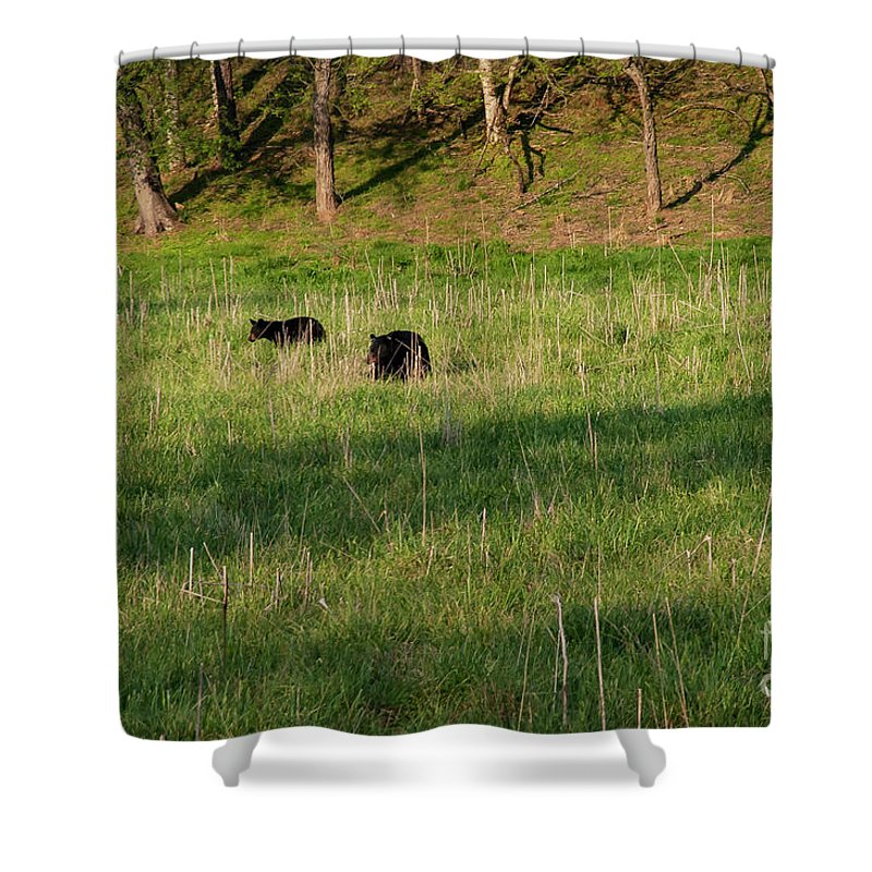 Cades Cove Shower Curtain featuring the photograph Mom And Cub by Bob Phillips