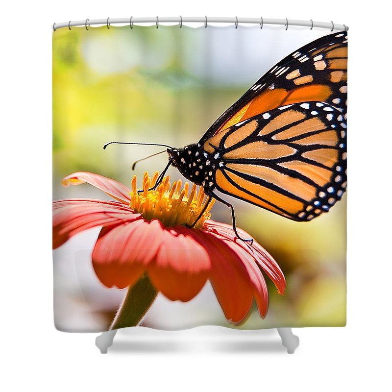 Butterfly Shower Curtain featuring the photograph Monarch Butterfly by Chris Lord
