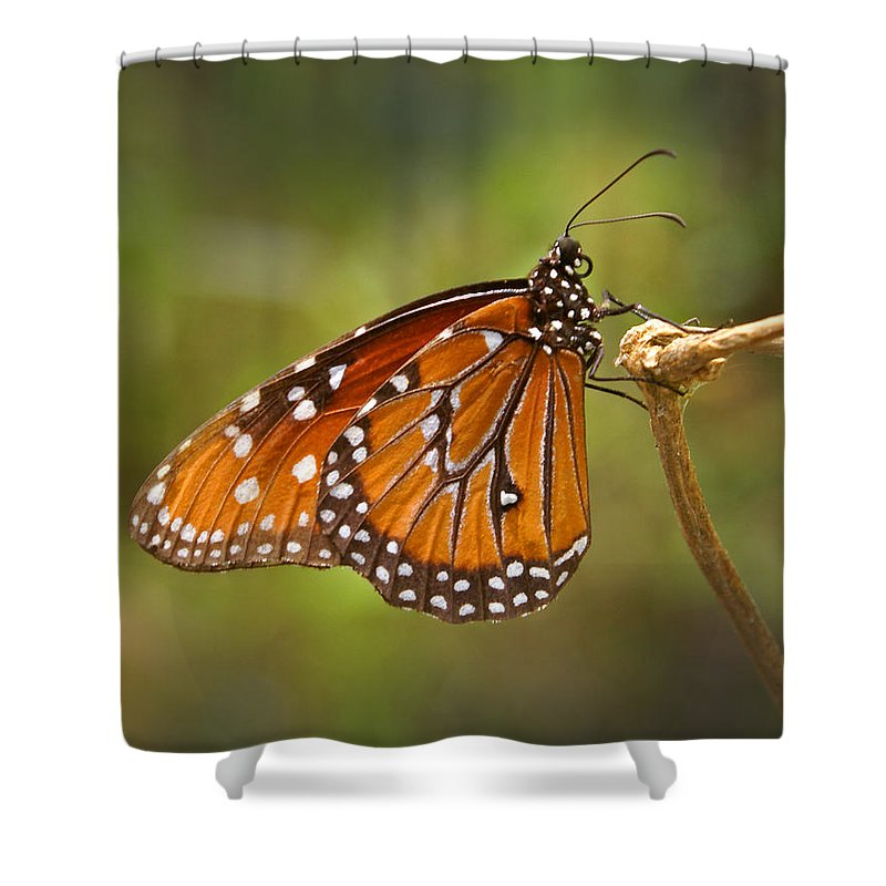 Monarch Shower Curtain featuring the photograph Monarch Butterfly by Heather Coen