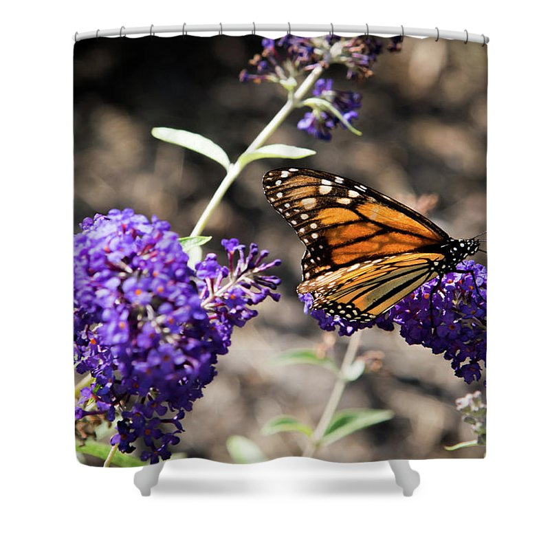 Monarch Shower Curtain featuring the photograph Monarch Butterfly by Jaime Lind