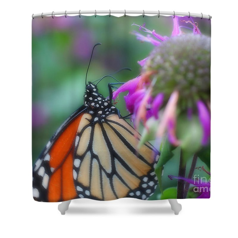 Butterfly Shower Curtain featuring the photograph Monarch Butterfly Posing by Smilin Eyes Treasures